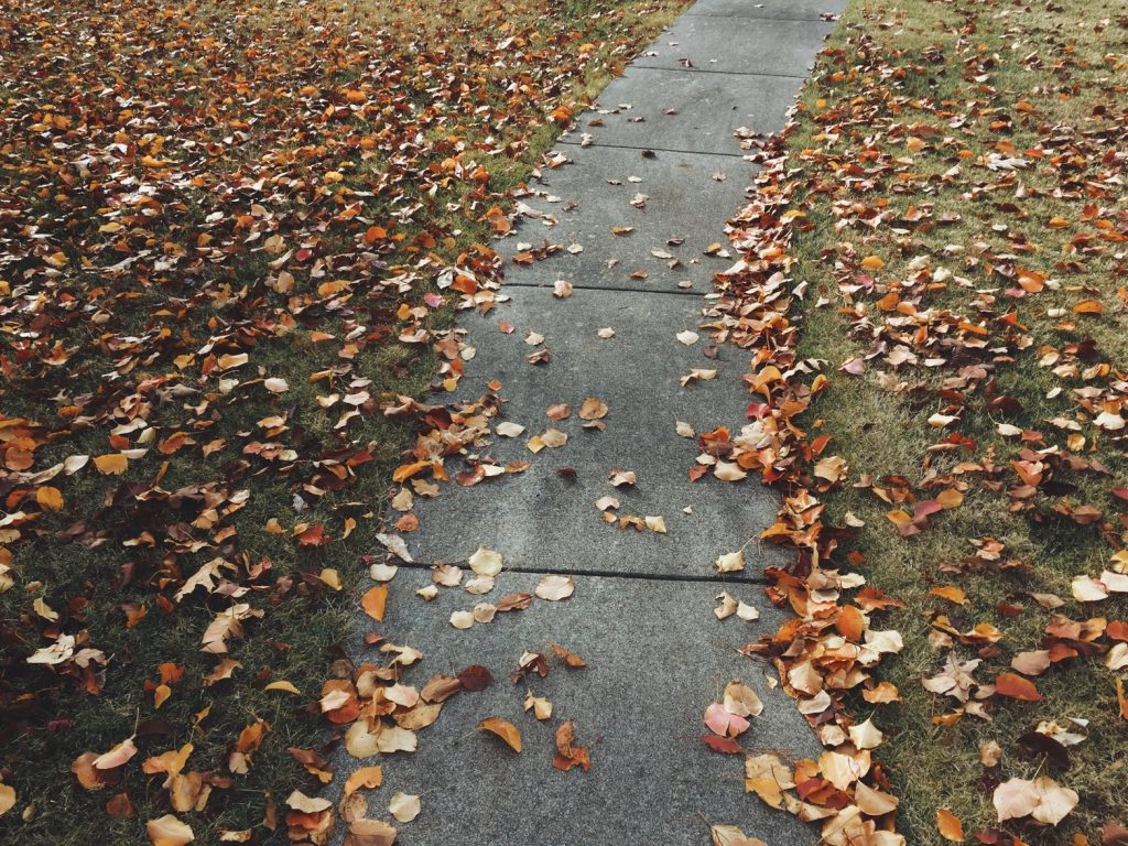 Leaves on the sides of a path