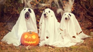 Dogs dressed as ghosts, fancy dress, pumpkin