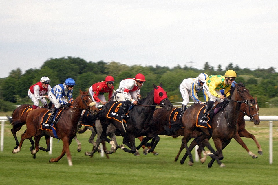 Horce race at York Racecourse
