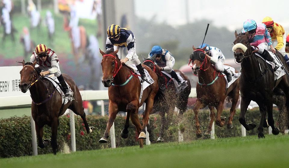 Horse race at York Racecourse