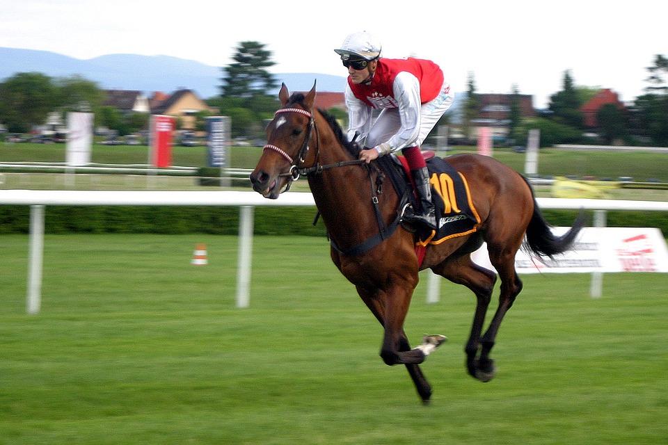 Horse and jockey at York Races